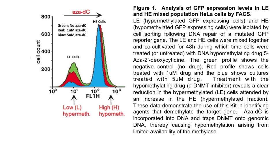 GFP Expression in LE and HE mixed population HeLa cells by FACS