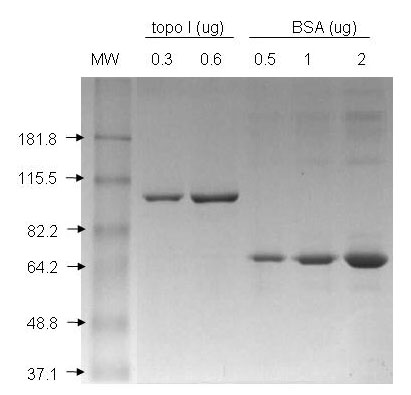 Topo I Mutated Baculovirus Data