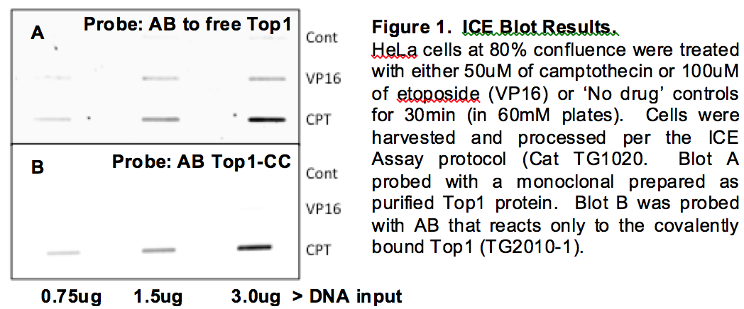 Top1-CC Ice Blot Results